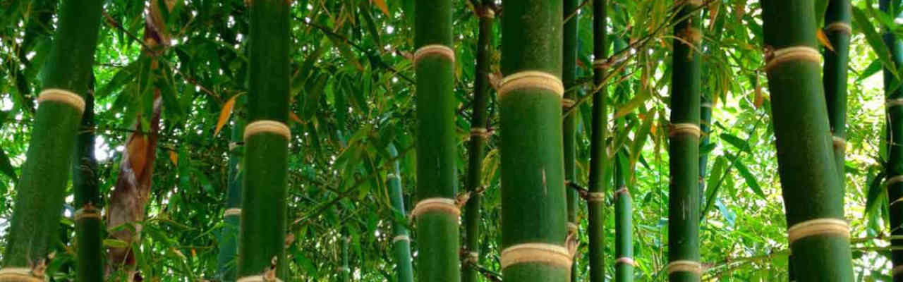 Bamboo Infused Vs Coir Which Is Better In 2019